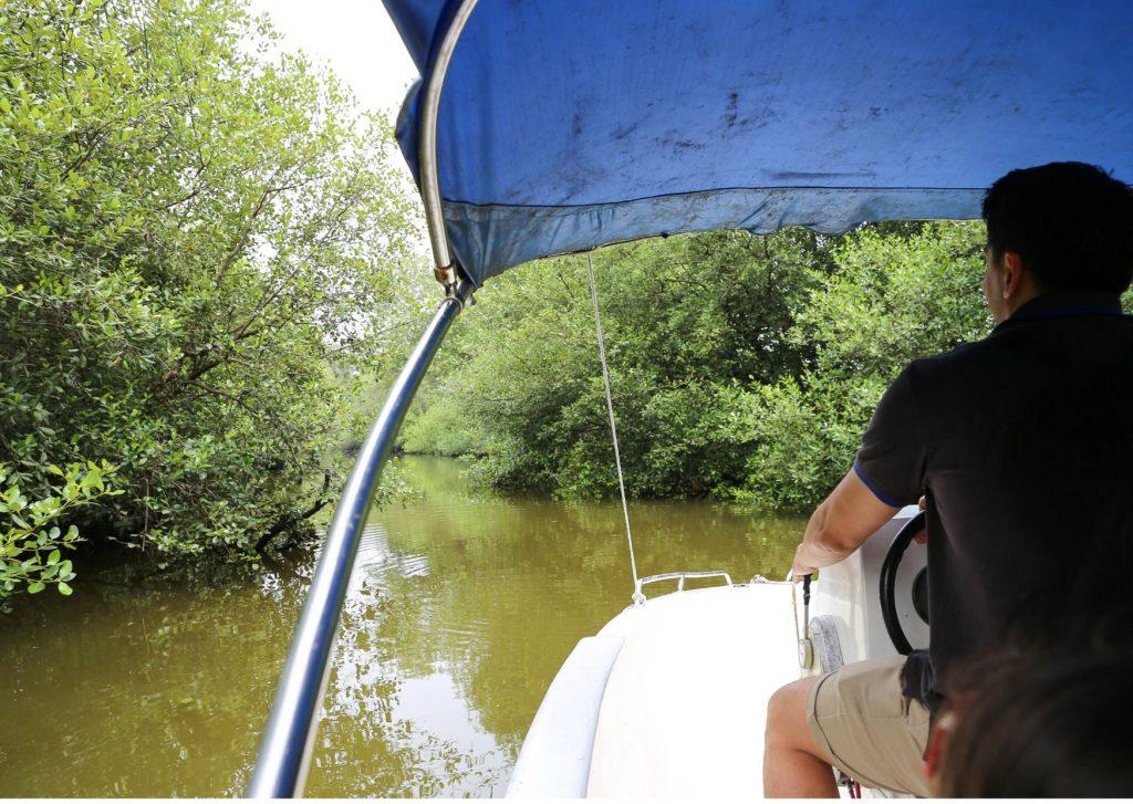 taman-wisata-mangrove-jakarta