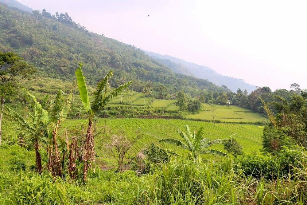 BSP-Farm-Bogor-Team-Curious